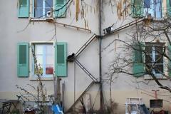 Λύνουν και το τελευταίο τους πρόβλημα οι Ελβετοί: Φτιάχνουν σκάλες για να ανεβαίνουν οι γάτες στα κεραμίδια