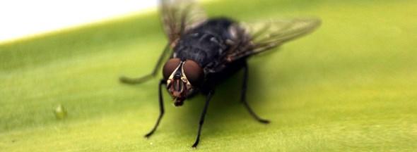 Σπιτική συνταγή για να εξαφανίσετε τις μύγες από το σπίτι σας - Φωτογραφία 1