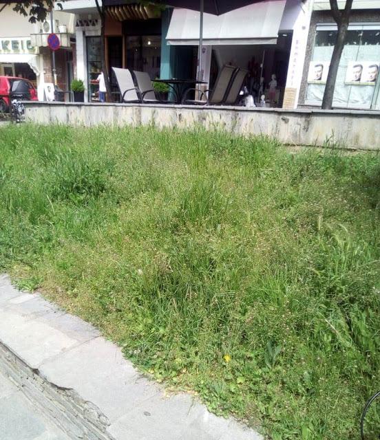 Γρεβενά, η πράσινη πόλη. Τόσο πράσινη που υπάρχουν δύο πιθανότητες.. -(Γράφει αναγνώστης) - Φωτογραφία 1