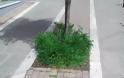 Γρεβενά, η πράσινη πόλη. Τόσο πράσινη που υπάρχουν δύο πιθανότητες.. -(Γράφει αναγνώστης) - Φωτογραφία 4