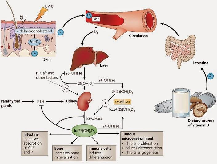 Βιταμίνη D και οστεοπόρωση. Πόση έκθεση στον ήλιο χρειάζεται; Τροφές με βιταμίνη D - Φωτογραφία 3