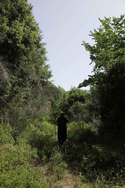 12049 - Η διαδρομή Βατοπαίδι - Παντοκράτορος από το μονοπάτι (φωτογραφίες) - Φωτογραφία 5