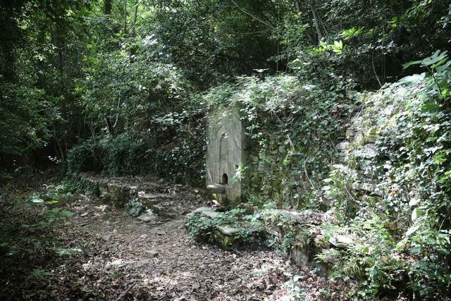 12049 - Η διαδρομή Βατοπαίδι - Παντοκράτορος από το μονοπάτι (φωτογραφίες) - Φωτογραφία 6