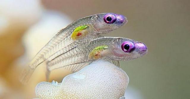 Τα διαφανή ζώα που δεν φανταζόταν κανείς ότι υπάρχουν (Photos) - Φωτογραφία 1