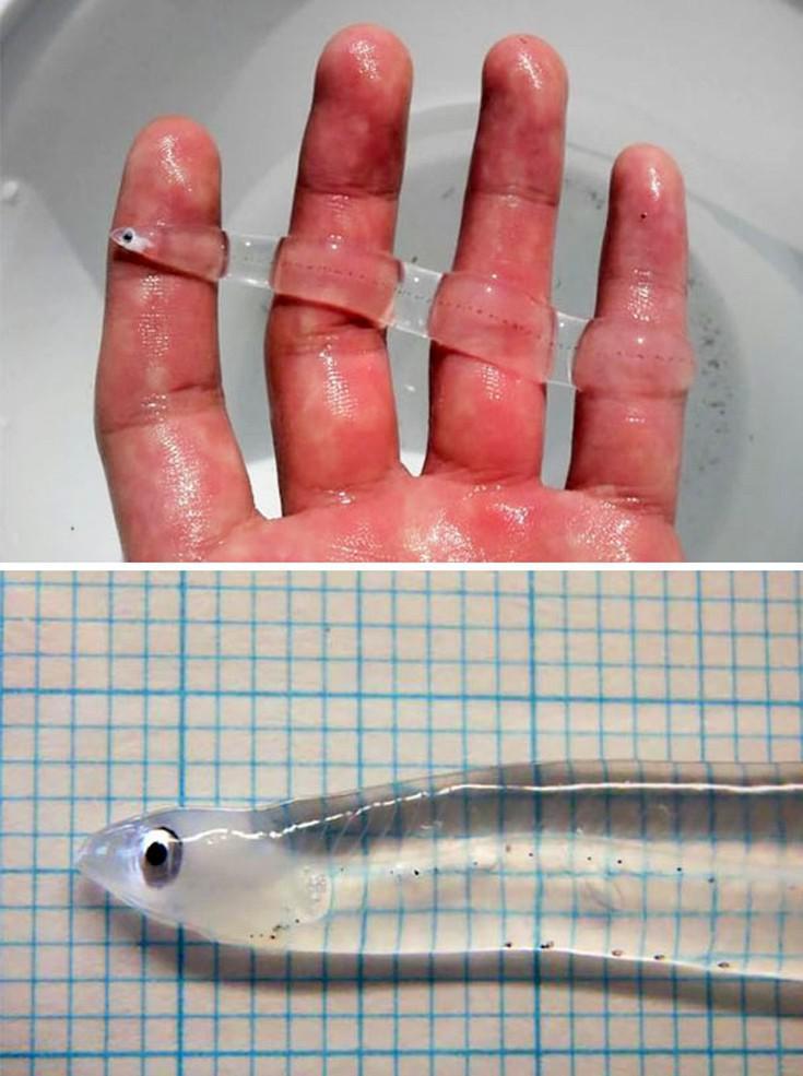 Τα διαφανή ζώα που δεν φανταζόταν κανείς ότι υπάρχουν (Photos) - Φωτογραφία 5