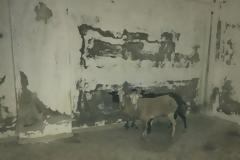 Κολαστήριο για πρόβατα σε εγκαταλελειμμένο κτίριο στη Χερσόνησο