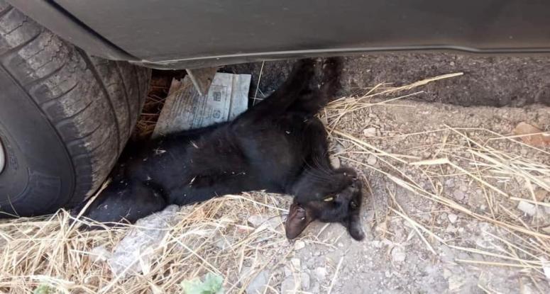 Πάτρα: Πάρκαρε το αυτοκίνητο του επάνω σε ένα ζωντανό γατάκι και ενοχλήθηκε που πήγε η πυροσβεστική να το απεγκλωβίσει (Photos) - Φωτογραφία 1