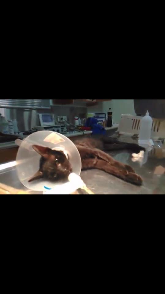 Πάτρα: Πάρκαρε το αυτοκίνητο του επάνω σε ένα ζωντανό γατάκι και ενοχλήθηκε που πήγε η πυροσβεστική να το απεγκλωβίσει (Photos) - Φωτογραφία 2