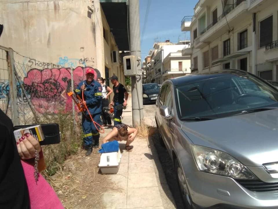 Πάτρα: Πάρκαρε το αυτοκίνητο του επάνω σε ένα ζωντανό γατάκι και ενοχλήθηκε που πήγε η πυροσβεστική να το απεγκλωβίσει (Photos) - Φωτογραφία 3