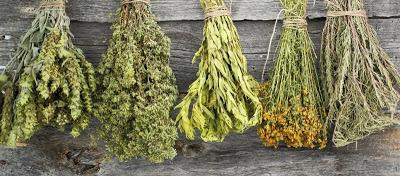 Ουρικό οξύ: Τα βότανα που το «διαλύουν» - Φωτογραφία 1