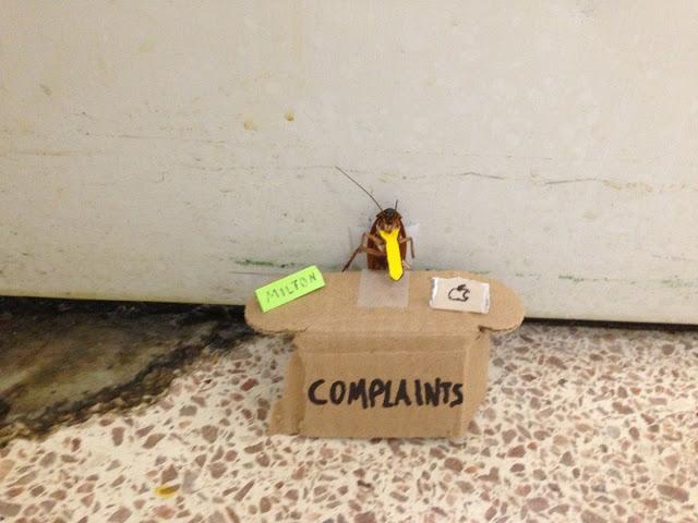 Οι κατσαρίδες έρχονται και είναι ανίκητες - Φωτογραφία 2