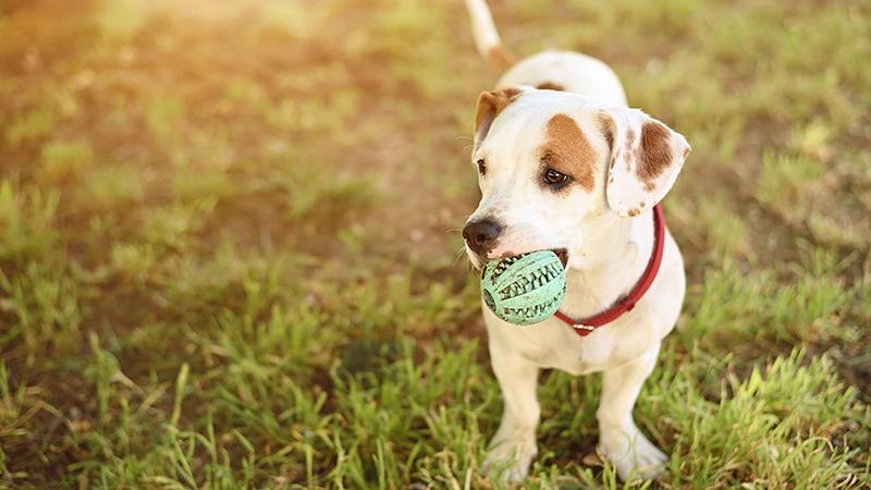 Γιατί (δεν) πρέπει να φερόμαστε στο σκυλί σαν ήταν το παιδί μας - Φωτογραφία 1