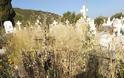 Τα χόρτα έπνιξαν το παλιό κοιμητήριο στο ΜΟΝΑΣΤΗΡΑΚΙ Βόνιτσας (ΔΕΙΤΕ ΦΩΤΟ)
