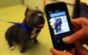 Αναπτύχθηκε μια νέα εφαρμογή για την αναγνώριση των σκύλων από την μύτη