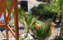 Παραλία Έλλη: Η Αποτυχία Της Αναβάθμισης Του Συστήματος Ασφάλειας Των Παραλιών Μας - Φωτογραφία 15