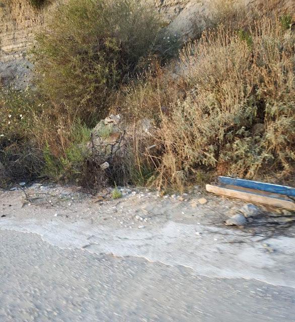 Καταγγελία ΠΑΛΑΙΡΟΣ: Απαράδεκτη η κατάσταση στον παραλιακό δρόμο Ποταμάκι -Λιμάνι Παλαίρου - Φωτογραφία 20