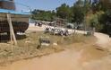 Καταγγελία ΠΑΛΑΙΡΟΣ: Απαράδεκτη η κατάσταση στον παραλιακό δρόμο Ποταμάκι -Λιμάνι Παλαίρου - Φωτογραφία 11