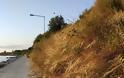 Καταγγελία ΠΑΛΑΙΡΟΣ: Απαράδεκτη η κατάσταση στον παραλιακό δρόμο Ποταμάκι -Λιμάνι Παλαίρου - Φωτογραφία 7
