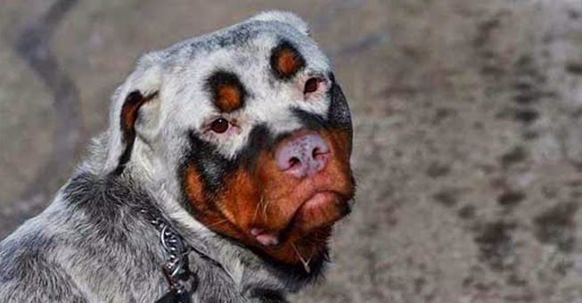 33 μοναδικοί σκύλοι που θα λατρέψετε αμέσως (εικόνες) - Φωτογραφία 1