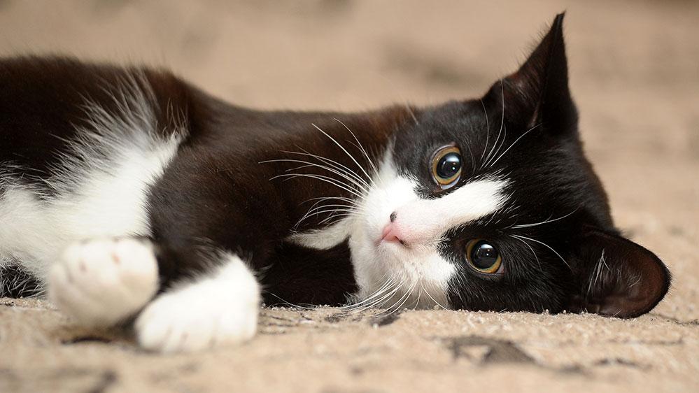 Να πώς θα «ξυπνήσετε» την παιχνιδιάρικη φύση της γάτας σας - Φωτογραφία 1