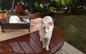 Χάθηκε ο γάτος της φωτογραφίας στον ΑΣΤΑΚΟ - Μήπως τον είδατε;