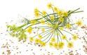 Το φυσικό φάρμακο του πεπτικού συστήματος που νικά τη δυσπεψία