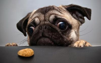 Οι μύθοι για τα σκυλιά που όλοι πιστεύουμε. Tα ψέματα που λέμε για το ποιόν τους - Φωτογραφία 1