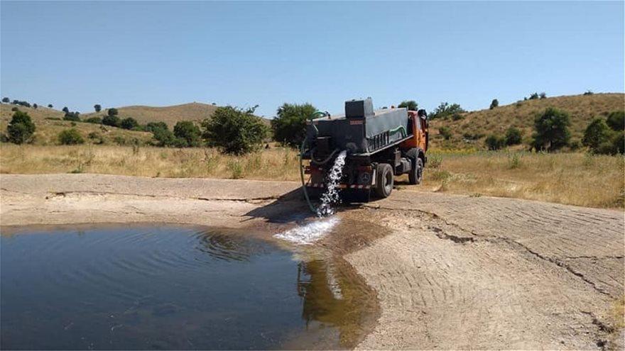 Πίνδος: Στέρεψαν οι πηγές, με υδροφόρες νερό για τα κοπάδια - Φωτογραφία 1