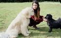 Τα 11 σημάδια «κατάθλιψης» στον σκύλο - Φωτογραφία 2