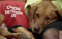 Οι σκύλοι «ορμούν» στον ανθρώπινο… καρκίνο