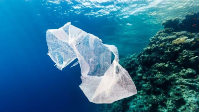 Γιατί τα θαλάσσια ζώα τρώνε τα πλαστικά που βρίσκουν στην θάλασσα - Φωτογραφία 1