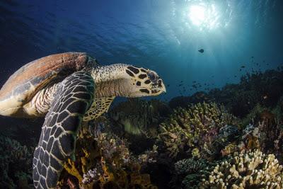 Γιατί τα θαλάσσια ζώα τρώνε τα πλαστικά που βρίσκουν στην θάλασσα - Φωτογραφία 2