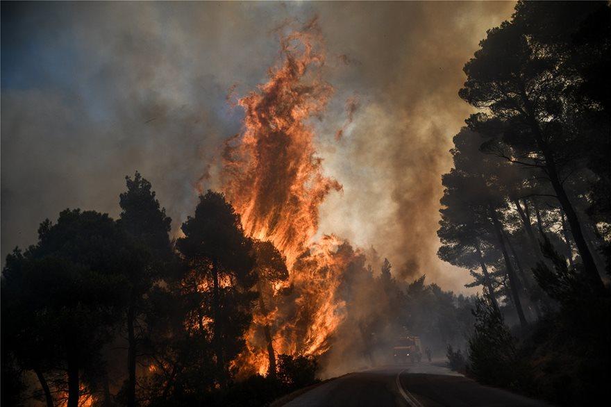 Εκτός ελέγχου η φωτιά στην Εύβοια - Εκκενώθηκαν τέσσερα χωριά - Φωτογραφία 6