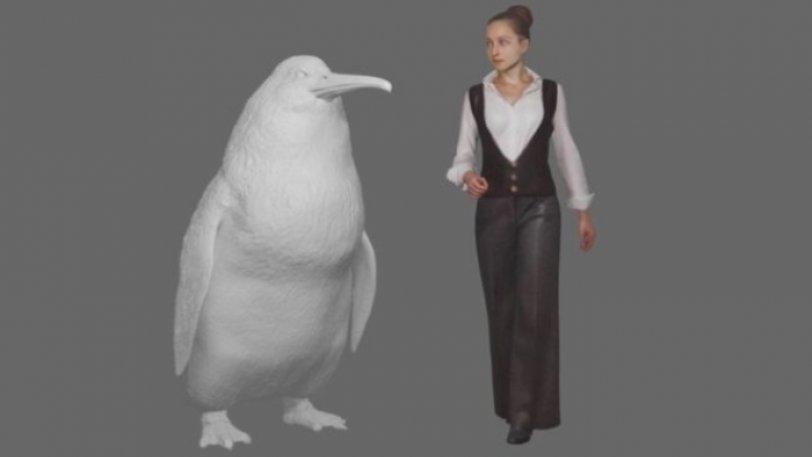 Ανακαλύφθηκε νέο είδος προϊστορικού πιγκουίνου με μέγεθος... ανθρώπου - Φωτογραφία 1