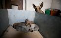 Η σκυλίτσα - ηρωίδα που έσωσε τα μωρά της από την φωτιά στον Υμηττό - Φωτογραφία 2