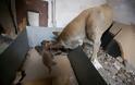 Η σκυλίτσα - ηρωίδα που έσωσε τα μωρά της από την φωτιά στον Υμηττό - Φωτογραφία 3