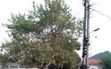 Παιχνίδια και παιδικά γέλια γέμισε η πλατεία της ΧΡΥΣΟΒΙΤΣΑΣ Ξηρομέρου - [ΦΩΤΟ] - Φωτογραφία 16