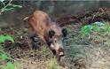 Συναγερμός στις κτηνιατρικές υπηρεσίες Κοζάνης για την