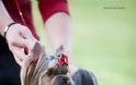 Γιόρκσαϊρ Τέριερ: Λιλιπούτειος αλλά με καρδιά λιονταριού - Φωτογραφία 5