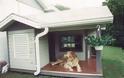 ΚΑΤΑΣΚΕΥΕΣ - Πάρτε ιδέες από τα πιο απίθανα σκυλόσπιτα! - Φωτογραφία 9