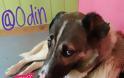 ΒΟΝΙΤΣΑ: Βοηθήστε τον ΟΝΤΙΝ -Μην το αφήσουμε στην μοίρα του, χρειάζεται να βρει σπίτι, αγάπη και φροντίδα!