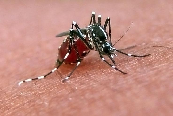 Υπουργείο Υγείας: Έκτακτη σύσκεψη για τα μολυσμένα κουνούπια - Φωτογραφία 1
