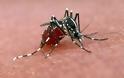Υπουργείο Υγείας: Έκτακτη σύσκεψη για τα μολυσμένα κουνούπια