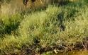 Αποκαταστάθηκε πλήρως η βλάβη στον κεντρικό αγωγό ύδρευσης στο ΒΑΣΙΛΟΠΟΥΛΟ Ξηρομέρου [ΦΩΤΟ] - Φωτογραφία 3