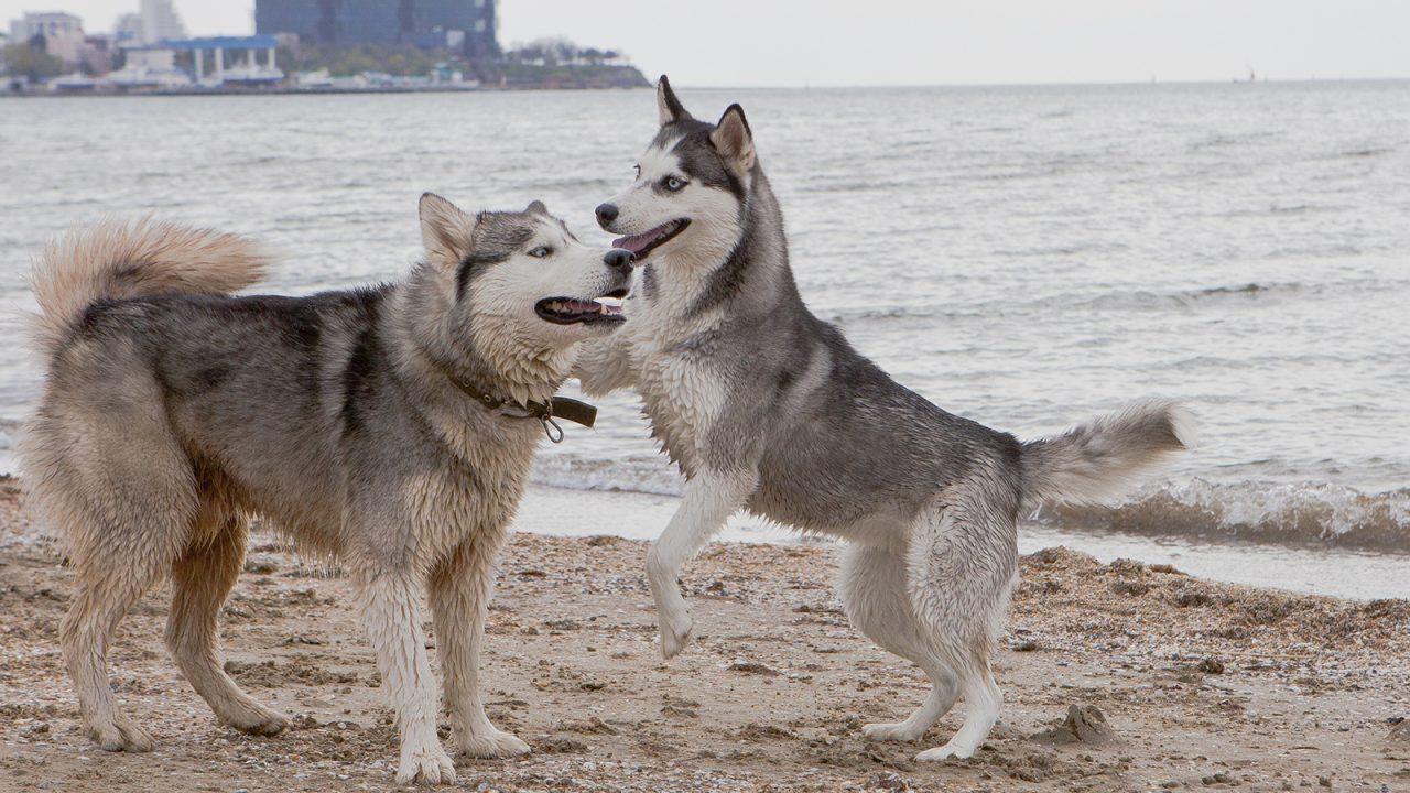 Γιατί ο σκύλος «καβαλάει» το πόδι μας και τους άλλους σκύλους - Φωτογραφία 1