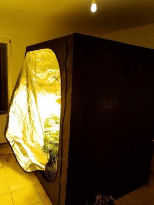 Εργαστήρι υδροπονικής καλλιέργειας κάνναβης ..σε διαμέρισμα - Φωτογραφία 3