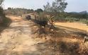 Κατούνα: Εργασίες ασφαλτόστρωσης από Δασσύλιο μέχρι Τρύφου (φωτο) - Φωτογραφία 3