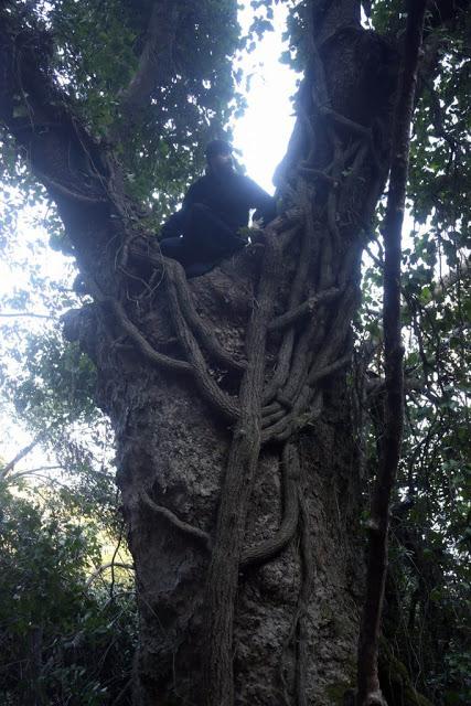 12579 - Αγιορείτικες φυσικές ομορφιές. Φωτογραφικό ταξίδι σε καταρράκτη κοντά στο Βατοπαίδι - Φωτογραφία 25