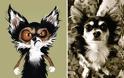 Πώς θα ήταν τα ζώα, αν η εμφάνιση ταίριαζε στον χαρακτήρα τους. - Φωτογραφία 15