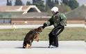 Επίδειξη σκύλων της ομάδας «Κέρβερος» στην 110 Π.Μ. - Φωτογραφία 10